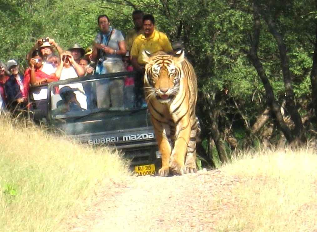 safari at ranthambore park